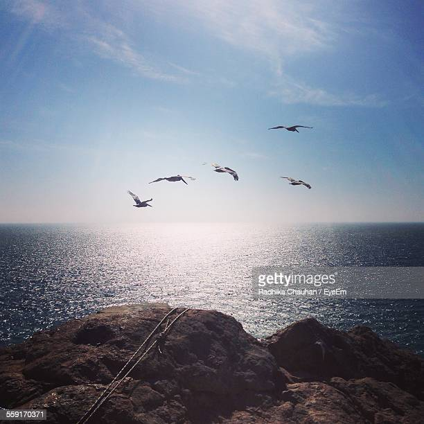 Flock Of Pelicans Flying Over Sea Against Sky