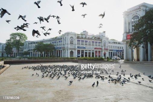 Flock of pigeons in a market, Connaught Place, New Delhi, Delhi, India