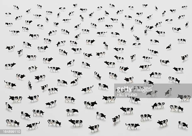 Flock of plastic cows