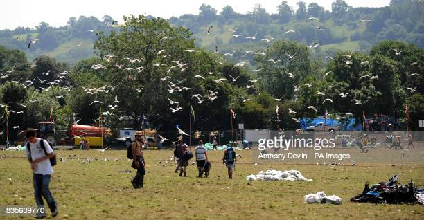 A flock of seagulls fly around the site as festival goers leave following the 2009 Glastonbury Festival in Pilton Somerset