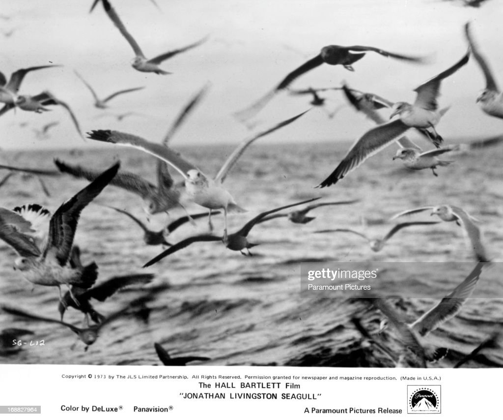 jonathan livingston seagull pictures getty images