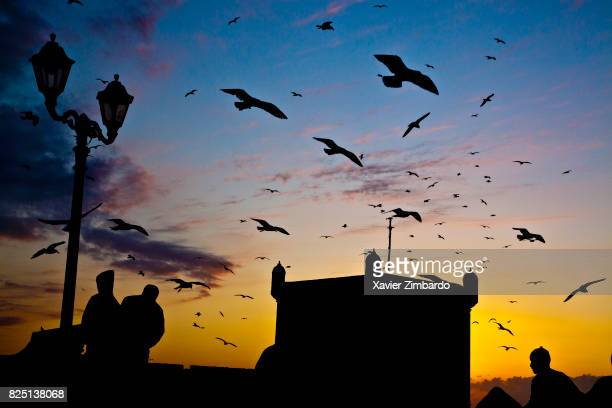 Flock of seagulls flying away at sunset with silhouettes of fishermen and Skala Genoesebuilt citadel tower on February 17 2009 in the harbour of...