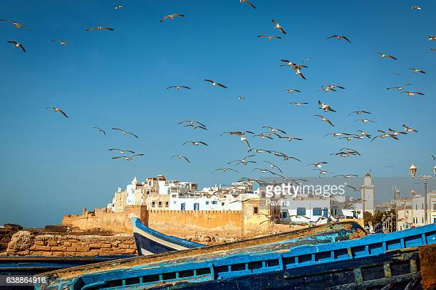 Flock of seagulls over the fishing town Essaouira, Morocco Africa