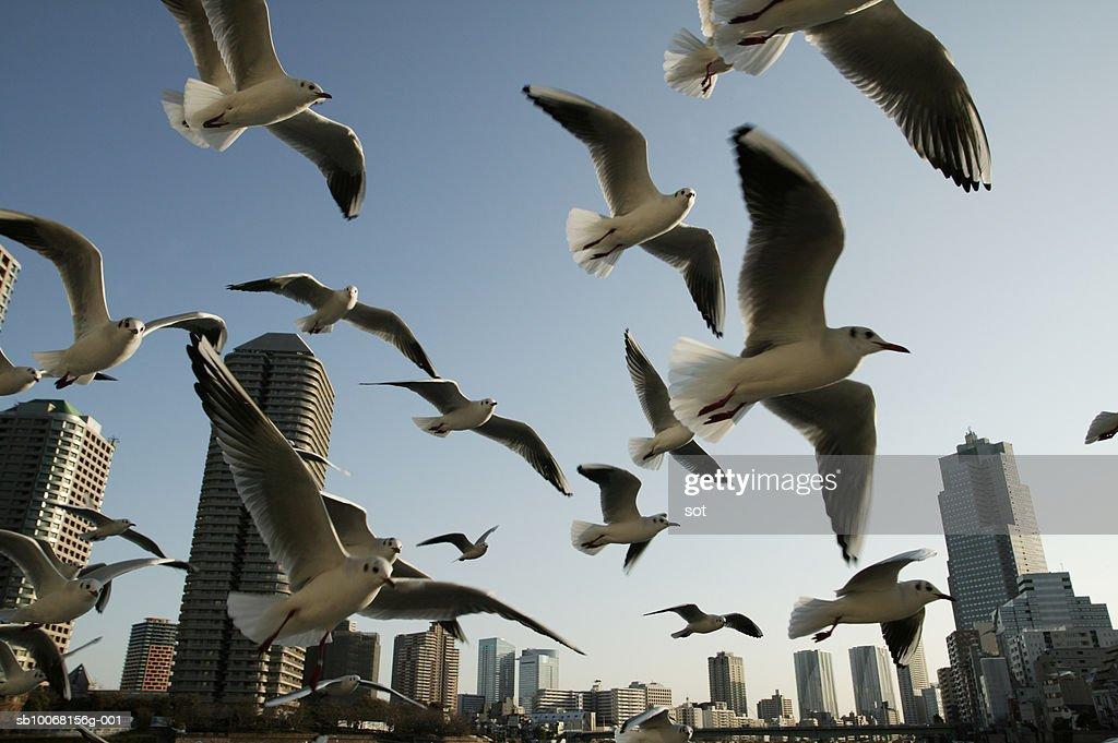 Flock of seagulls : Stock Photo