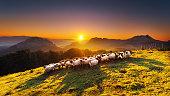 Flock of sheep in Saibi mountain. Urkiola, Basque Country