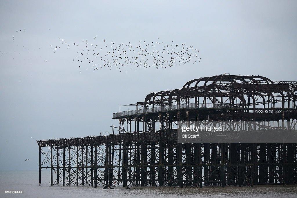 A flock of starlings arrive to roost in Brighton's derelict West Pier on January 9, 2013 in Brighton, England.