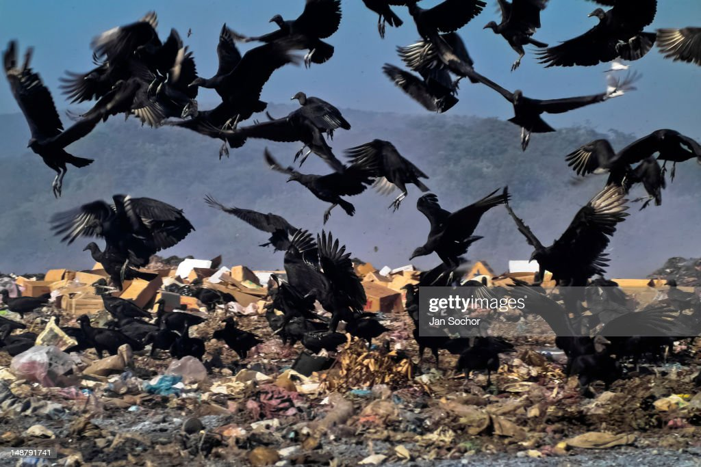 A flock of vultures flies over the garbage dump La Chureca on 10 November 2004 in Managua, Nicaragua. La Chureca is the biggest garbage dump in Central America, it is a lively sewer of Managua, the capital of Nicaragua. This dumping ground lies on the shores of the contaminated lake Xolotlán. Hundreds of human trash recyclers search in tons of smouldering garbage mainly metals (copper, aluminium), others concentrate on glass which is cheap, but in bigger amount. The majority of the searchers are families with children for whom recycling is a regular job. The children very often eat the food they find on the dump, none of them goes to school, they suffer from skin diseases, they have high levels of lead and DDT in blood. Many of them sniff glue, the drug of the poorest. The inhabitants of Managua say that there is the end of the world in Nicaragua – it is called La Chureca.
