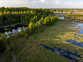 Flooded forest fields
