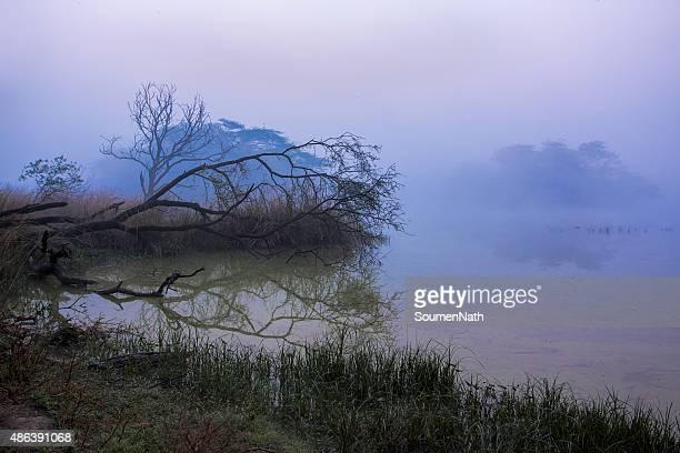 Marais inondé durant le matin dans le parc national de Sultanpur-Inde