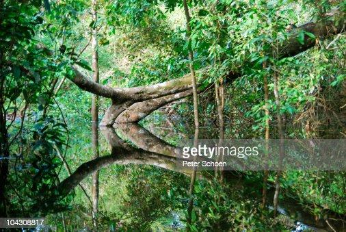 Flooded rainforest (várzea)
