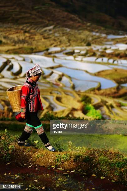 Inondé de rizières au sud de la Chine