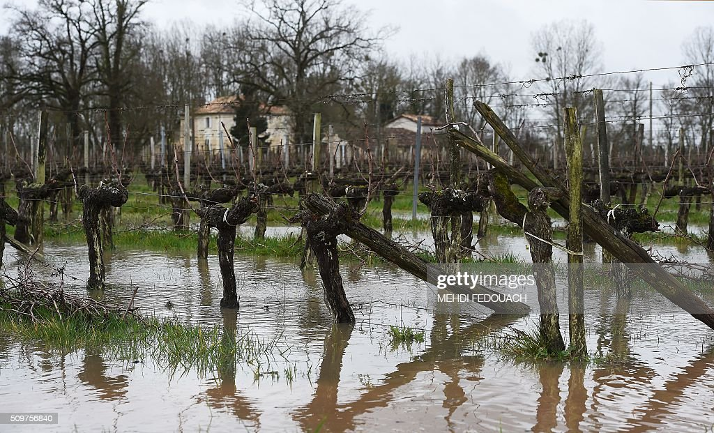 Flooded vineyards are pictured at a winemaker's in Arveyres, southwestern France, on February 12, 2016 after the Garonnne river reached a flood peak over 6,8 meters. / AFP / MEHDI FEDOUACH
