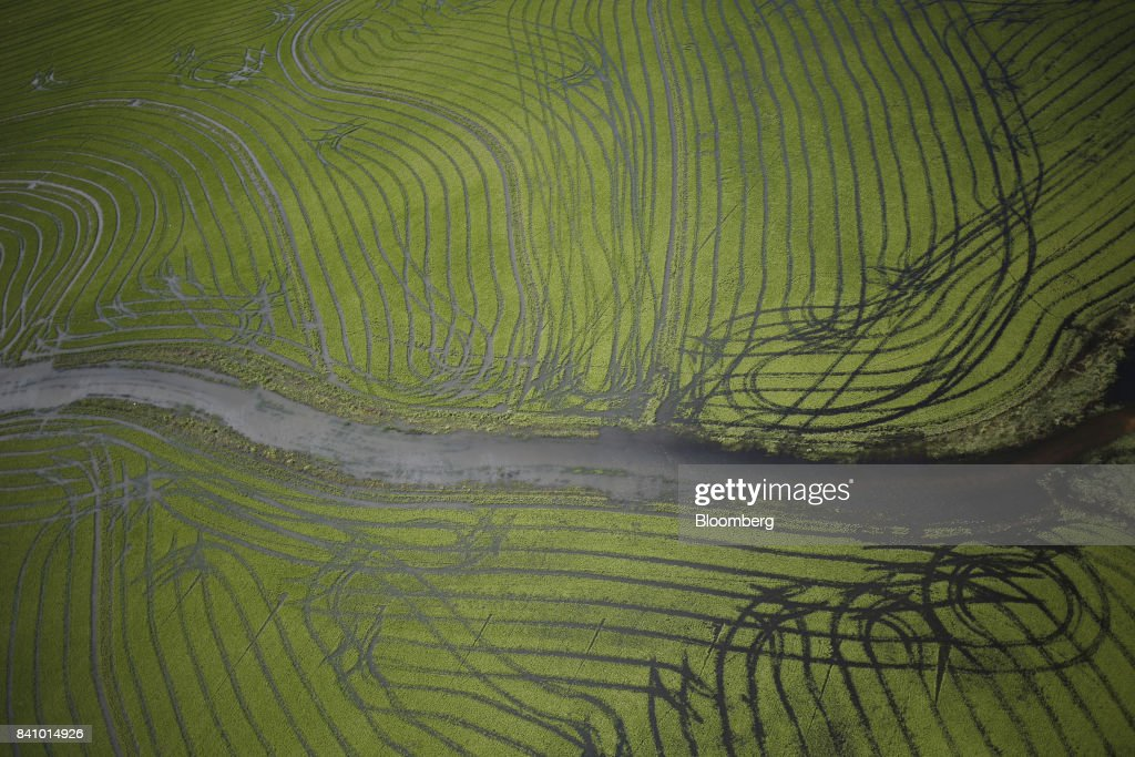 Floodwaters from Hurricane Harvey are seen in a farm field in this aerial photograph taken above Angleton, Texas, U.S., on Wednesday, Aug. 30, 2017. Unprecedented flooding from the Category 4 storm that slammed into the state's coast last week, sending gasoline prices surging as oil refineries shut, may also set a record for rainfall in the contiguous U.S., the weather service said Tuesday. Photographer: Luke Sharrett/Bloomberg via Getty Images