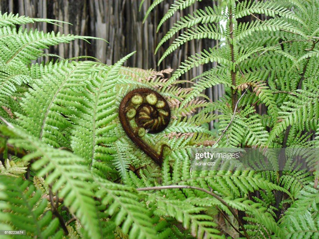flor animal : ストックフォト