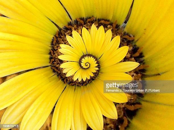 flor del infinito