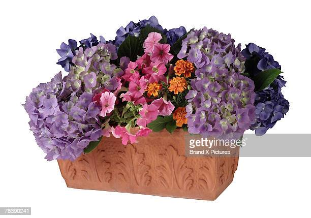 Floral arrangement in a window box