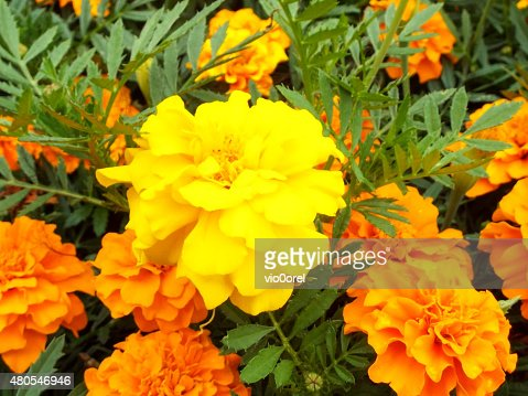 Floral Background : Stock Photo