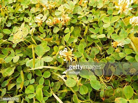 Fundo Floral : Foto de stock