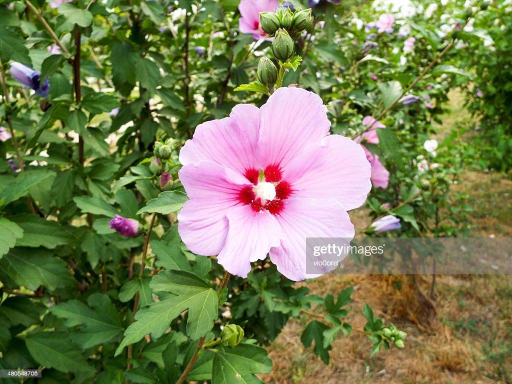 Fondo Floral : Foto de stock