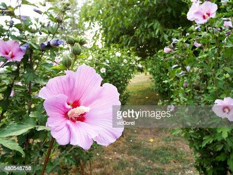 Sfondo floreale : Foto stock