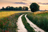 Summer landscape with country, floral  road between fields. Masuria, Poland.