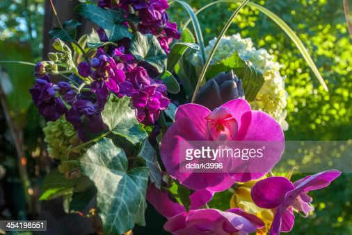 Floral Display : Stock Photo