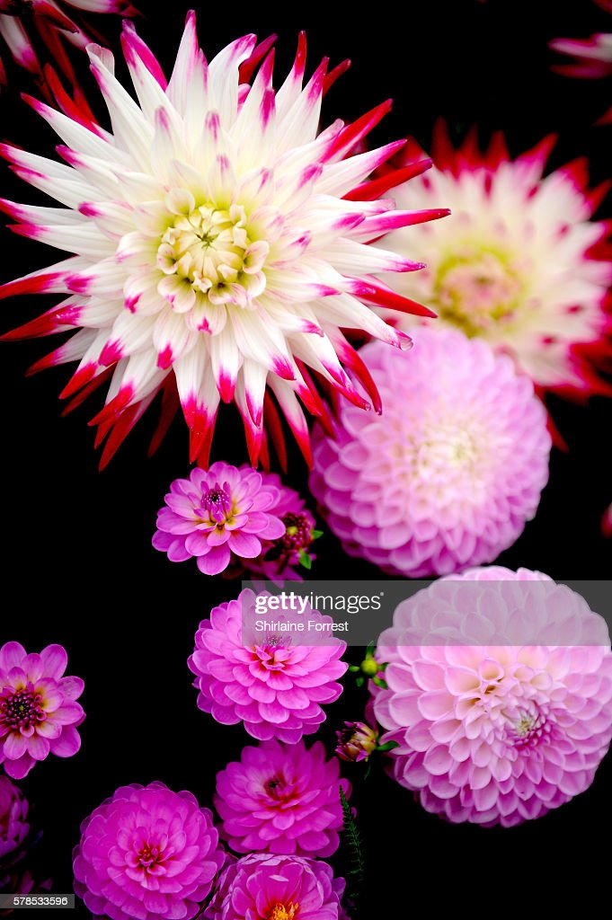 Floral displays during the RHS Flower Show at Tatton Park on July 21 2016 in Knutsford England