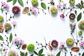 Flowers, leaves and branches frame on white background.