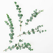 Floral layout made of eucalyptus branches on white background. Flat lay, top view
