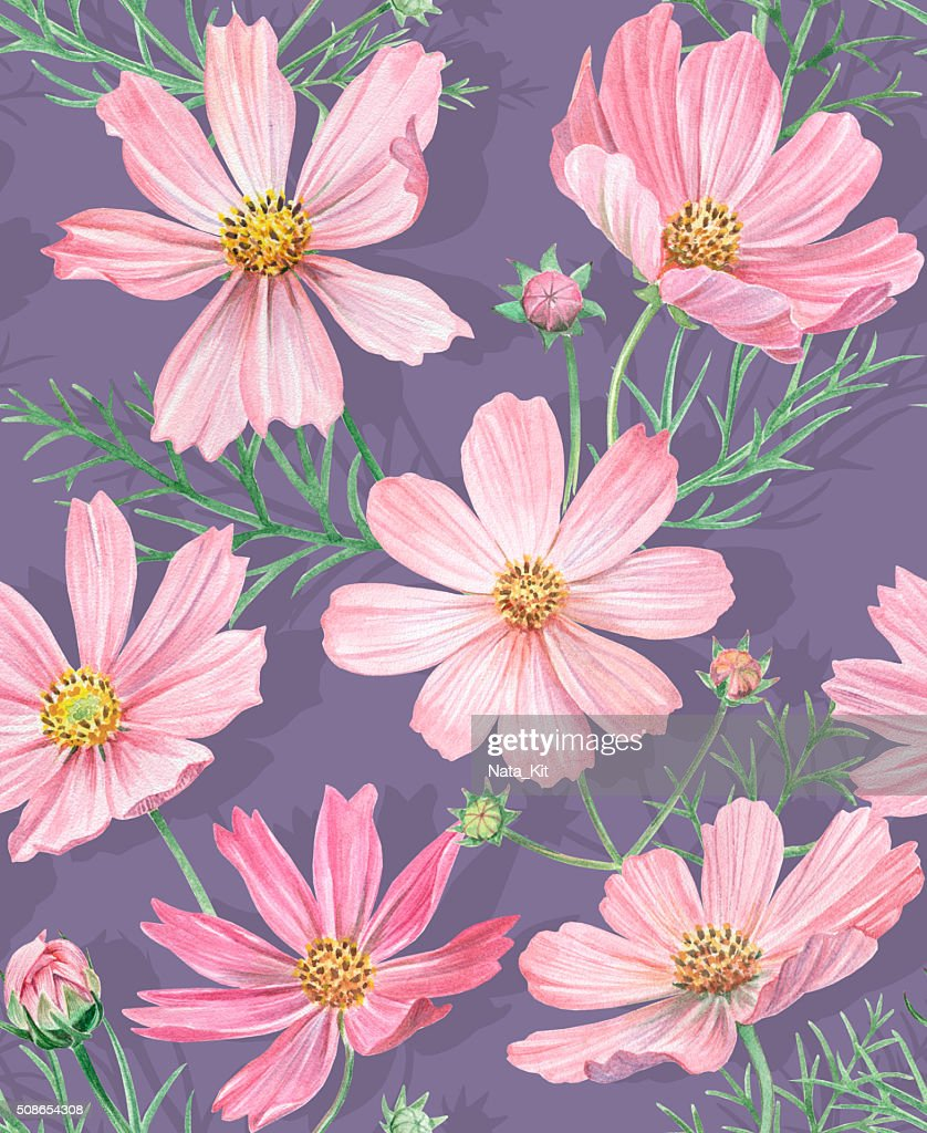 Floral seamless pattern with cosmos flowers : Stock Photo