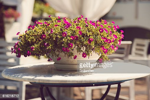 Floral summer arrangement : Stock-Foto
