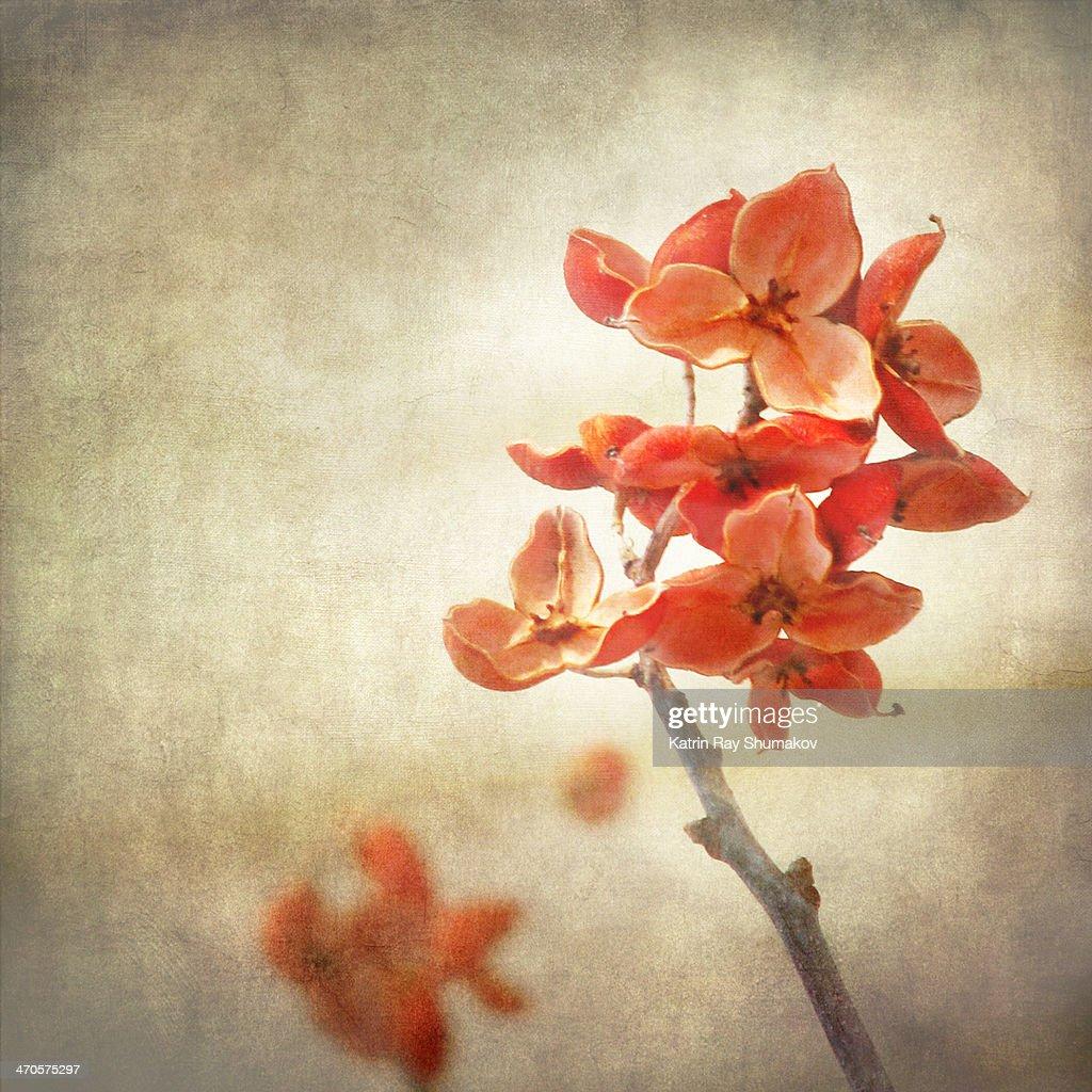 Floral Zen : Stock Photo