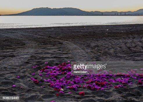 Flores sobre la arena : Stock Photo