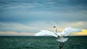 Florida Beach - Egret Landing