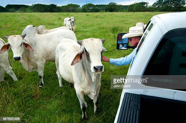 Florida Cattle Rancher