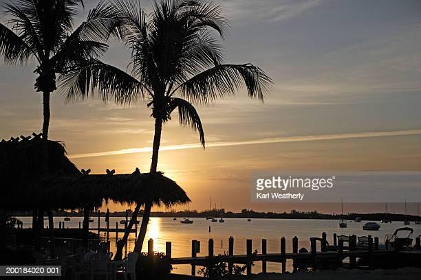 USA, Florida, Florida Keys, Key Largo, sea and palm trees, sunset