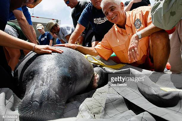 Florida Governor Charlie Crist helps members of the Florida Fish and Wildlife Conservation Commission the United States Fish and Wildlife Service the...