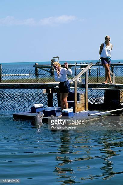 USA Florida Grassy Key Dolphin Research Center Training Atlantic Bottlenose Dolphin