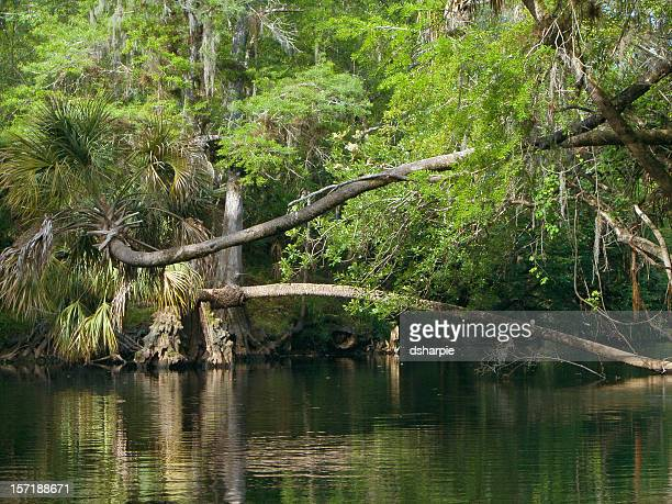 Florida Hillsborough River Scene
