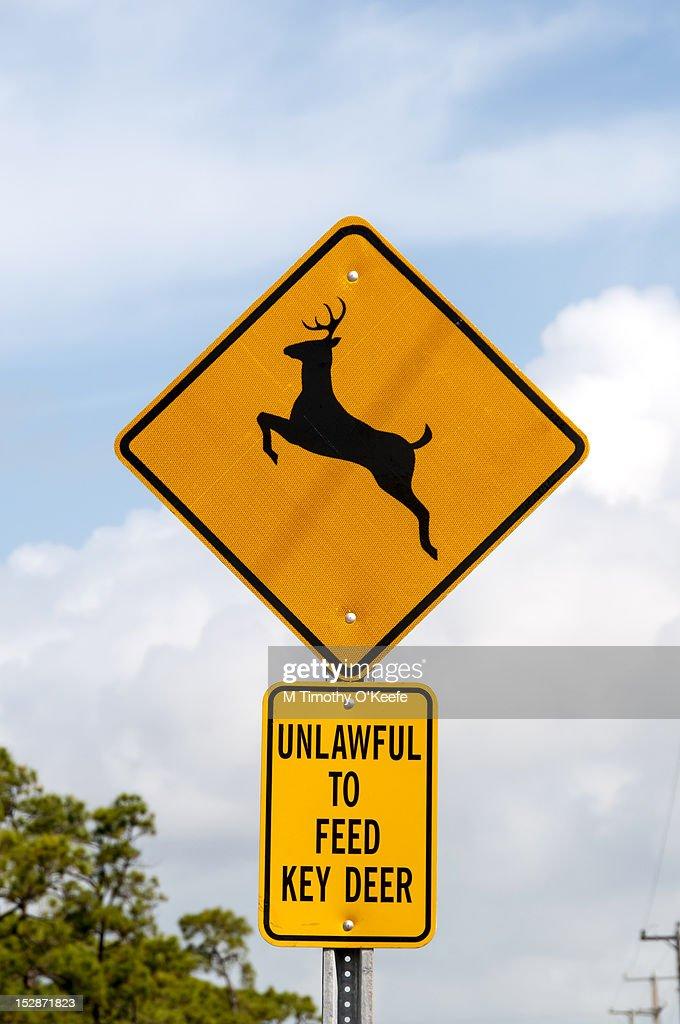 Florida Keys deer sign : Stock Photo