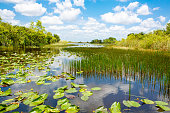 Florida wetland, Airboat ride at Everglades National Park in USA. Popular place for tourists, wild nature and animals.