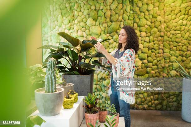 Florist arranging plant in flower shop