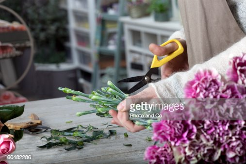 florist cutting flower with pruning shears : Stock Photo