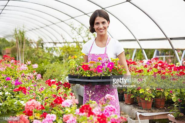 florist, holding, tray, pot flowers, greenhouse