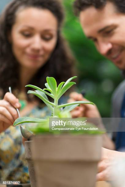 Florists potting plants in flower shop