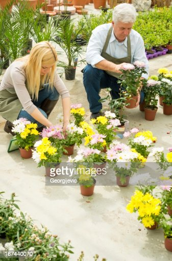 Florists working in greenhouse : Stock Photo