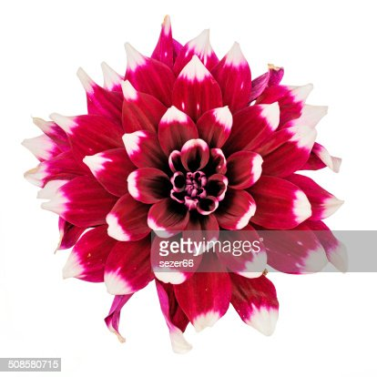 flower and beautiful petals : Stock Photo
