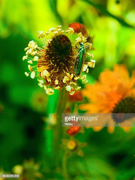 A flower and insect having nectar