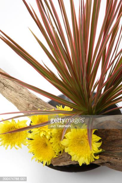 Flower arrangement with sunflowers and Dracaena concinna wood