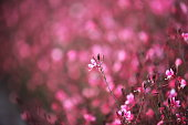 Beautiful flower picture with background
